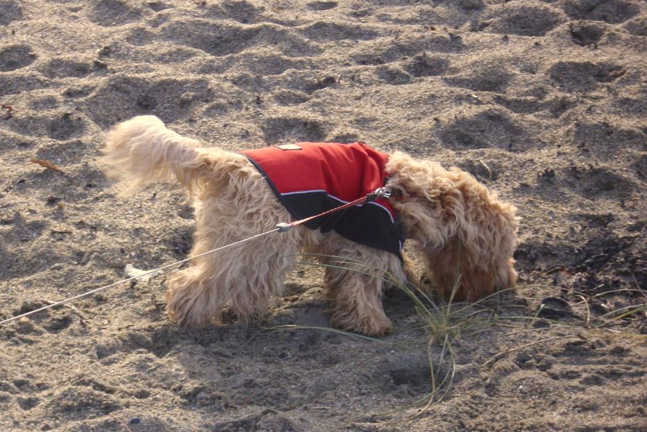 Bonnie on the beach